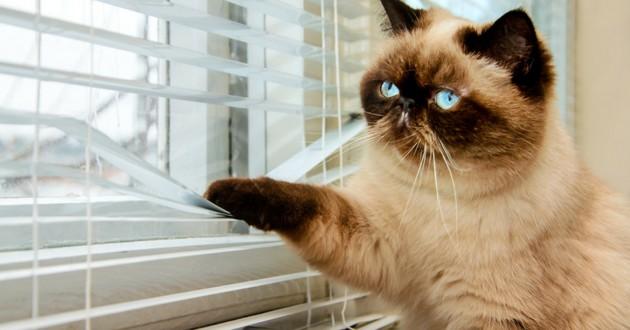 chat qui s'ennuie et regarde par la fenêtre