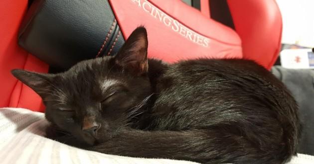 petit chat noir qui dort