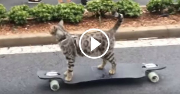 chat skate planche