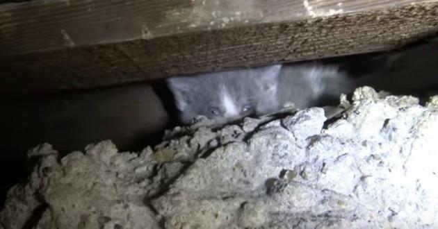 chatons coincés escaliers