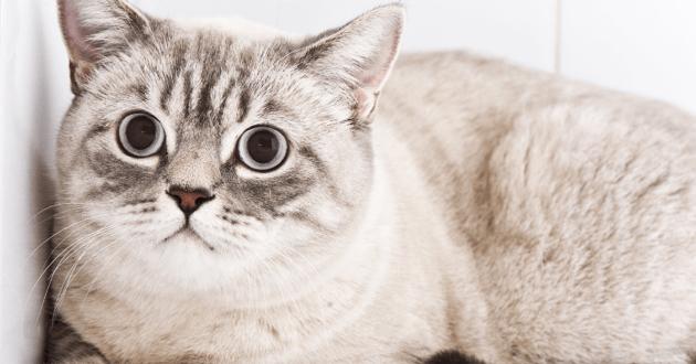 Chat regard apeuré