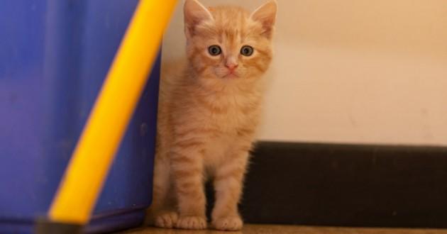 chat stressé zenifel