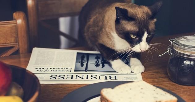 chat tete coincée nutella
