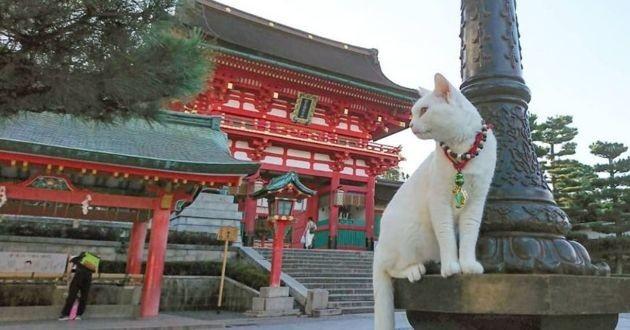 un chat blanc devant un temple bouddhiste