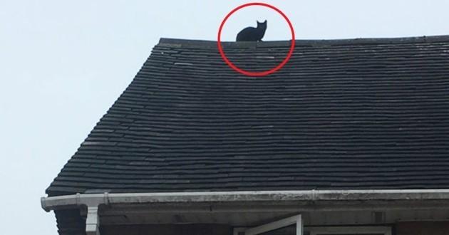 chat coincé toit