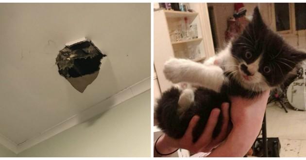 chat tombé plafond