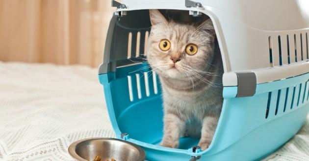 chat boite cage de transport