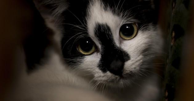 chat triste maltraité