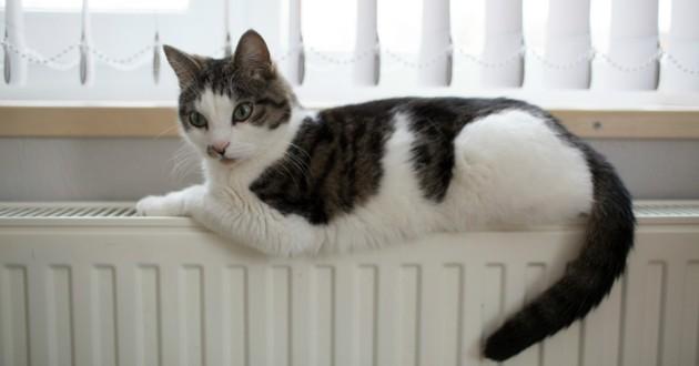 chat allongé sur radiateur