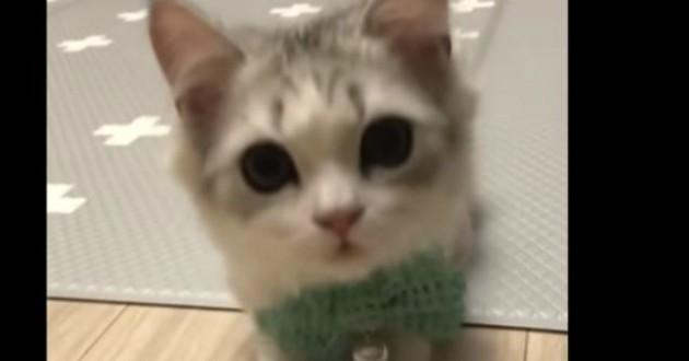 chat trop mignon