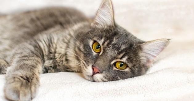 Chat tigré allongé