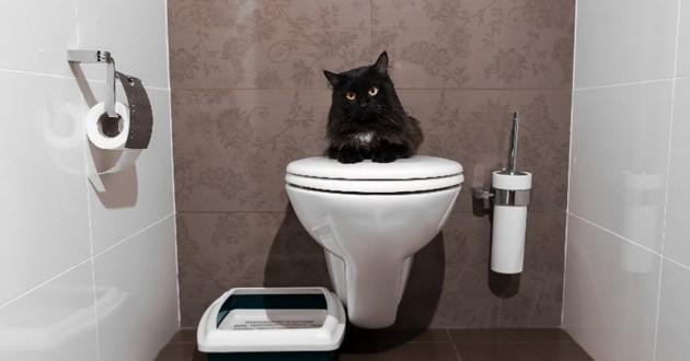 chat qui urine au meme endroit
