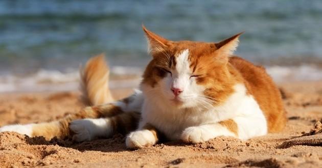 vacances d u2019 u00e9t u00e9   que faut-il avoir dans la trousse  u00e0 pharmacie de son chat