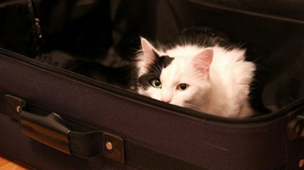 chat valise vacances