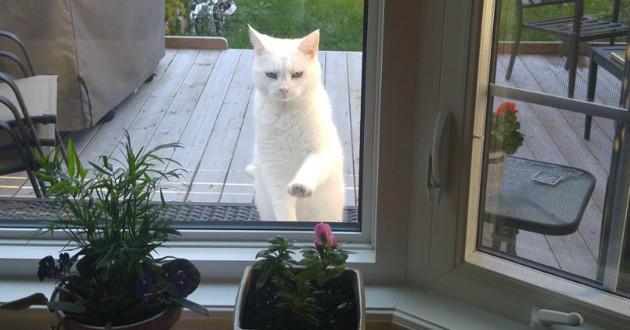 chat fenêtre voisin
