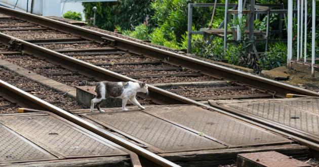 chat sur les voies