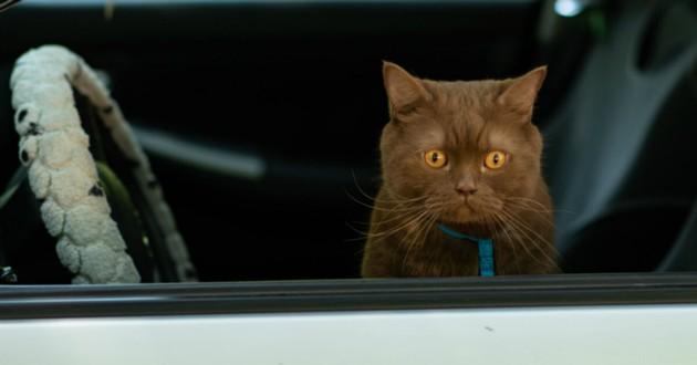 chaton dans une voiture