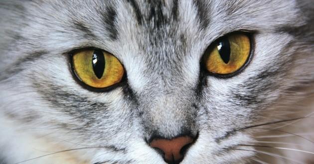 caractère du chat