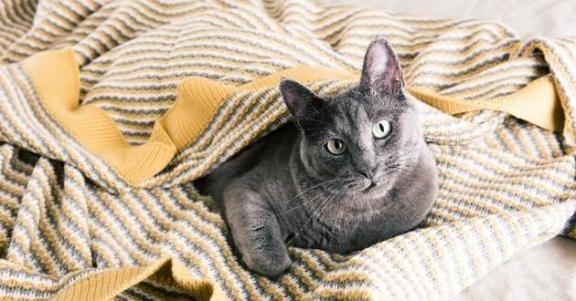 chat malade en automne