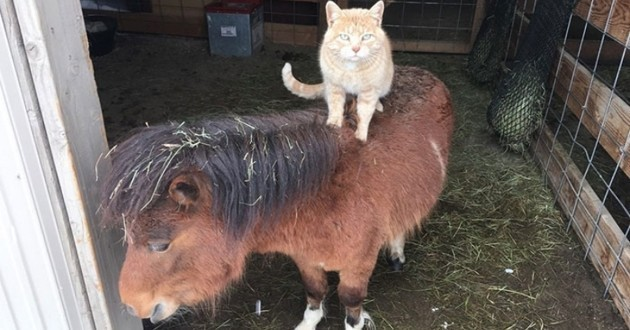 chat sur cheval ferme