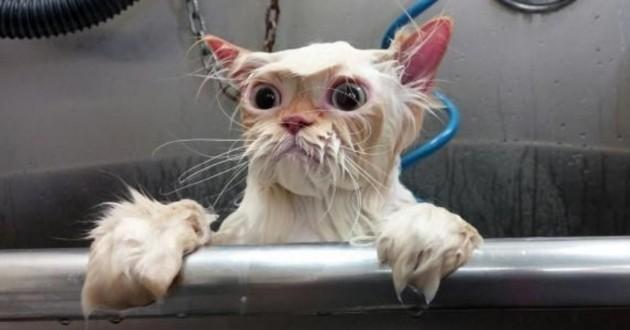 Ce chat sort de son bain et s'empare du Web… à mourir de rire !