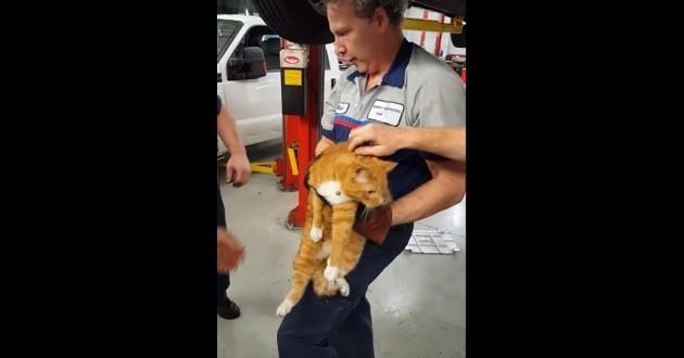 chat coincé voiture sauvé
