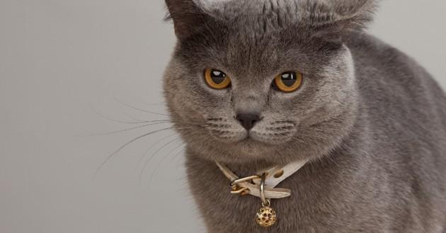 Calais : une détenue avait mis son bracelet électronique autour du cou de son chat
