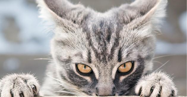 Marre que votre chat vous ignore ? Voilà LA technique qui va tout changer !