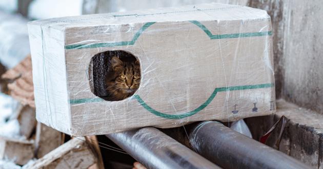 Chat errant dans un abri
