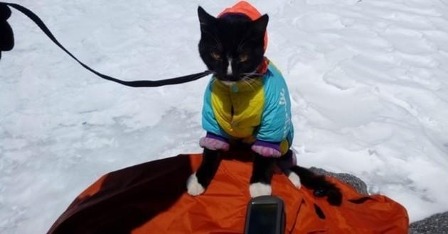chat en randonnée