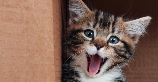 13 faits insolites sur les chats qu'il vous faut absolument savoir pour briller en société