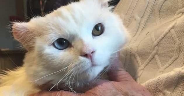 chat brûlé