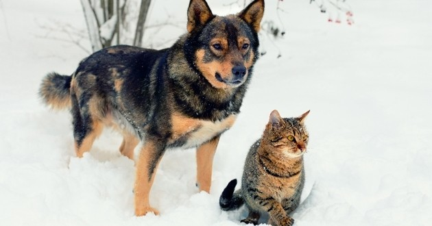 Chat chien neige