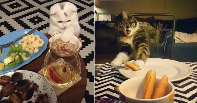 chats qui piquent de la nourriture