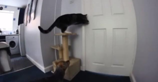 Aidé d'un chat très malin, un chien prend la fuite (Vidéo du jour)