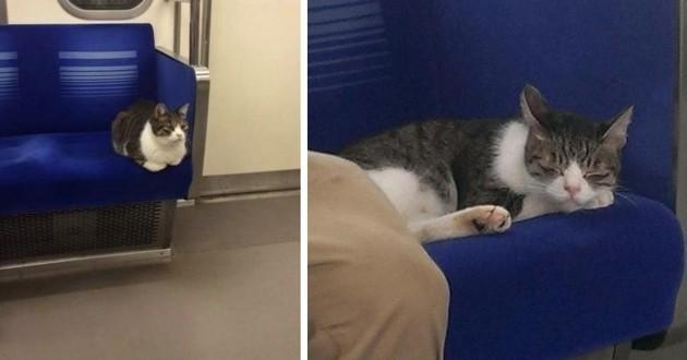 Vedette du métro de Tokyo, ce chat l'utilise quotidiennement depuis 2013 !