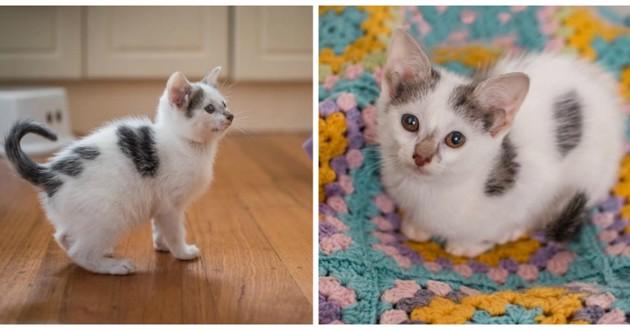 chaton 4 oreilles mignon