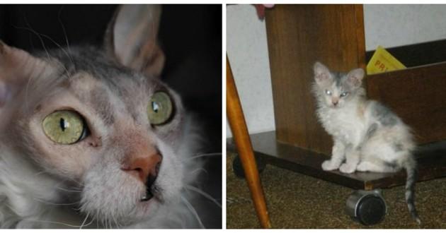 chaton bizarre