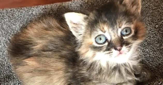 chaton adopté