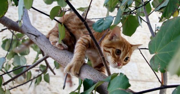 chat dans les arbres
