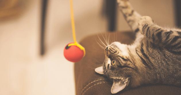 chaton balle