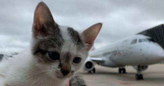 chaton errant avion aéroport