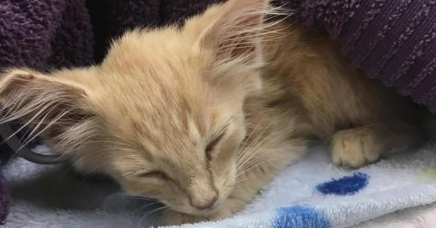 Elle sauve un chaton enferm dans une bo te accompagn d un petit mot sauvetage wamiz - Enlever les puces sur un chaton ...