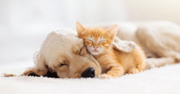 Chiot et chaton qui dorment ensemble