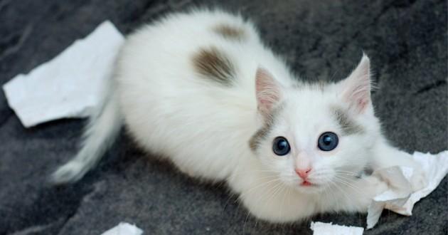 un chaton coupable qui a fait une betise
