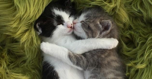 chaton couple