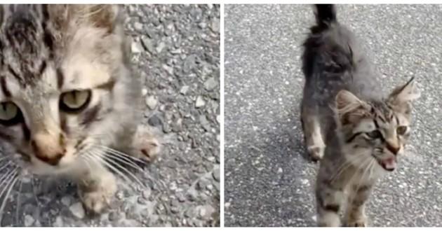 chaton dans la rue