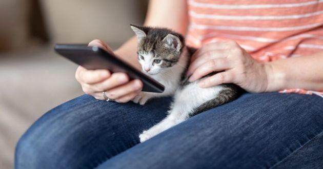 un chaton qui regarde un smartphone