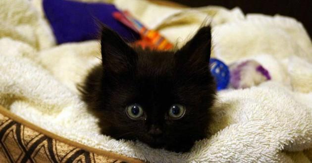 chaton noir handicapé