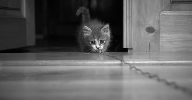 chaton meurtre